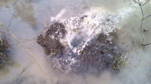 Water bubbling up through shot-hole drilled by contractor hired by SWN Resources Canada. APTN/Photo
